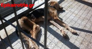 Κακοποίηση ζώων και εικόνες φρίκης στο Κυνοκομείο Βόλου!