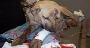 Η πρωτη φυλακιση χωρις αναστολη στην Ελλαδα για κακοποιηση σκυλου