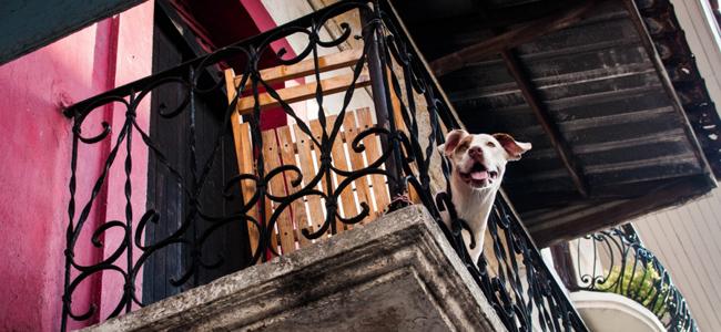 Σκυλιά στο μπαλκόνι, τέλος – Τι υπαγορεύει ο νόμος για τα κατοικίδια
