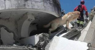 Σκύλος έσωσε 7 ανθρώπους και πέθανε από την κούραση!