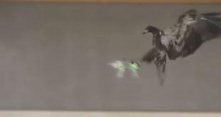 Η Αστυνομία εκπαιδεύει αετούς για να καταρρίπτουν τα drones (ελικοπτεράκια)! (Βίντεο)