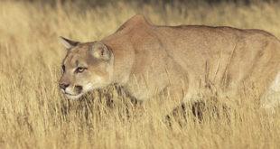 Ηρωίδα μητέρα επιτέθηκε σε λιοντάρι για να σώσει το 5χρονο παιδί της από τα σαγόνια του! (Βίντεο)