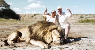 """Ήθελαν φωτογραφία """"θριάμβου"""" με το νεκρό λιοντάρι...ένα άλλο λιοντάρι όμως πήρε εκδίκηση! (Βίντεο)"""