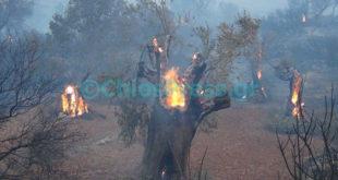 Καίγεται η Χίος! Μεγάλη φωτιά - Εκκενώθηκαν χωριά (Βίντεο)