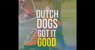 Ολλανδία: Η πρώτη χώρα ΧΩΡΙΣ αδέσποτα! (Βίντεο)