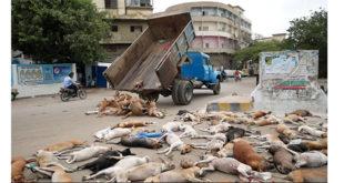 Φρική! Μαζική δολοφονία 1000 σκύλων (Σκληρό βίντεο)...