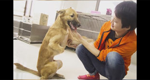 Έκοψε τα πόδια του σκύλου του με σπαθί γιατί του μάσησε τα παπούτσια! (Βίντεο)