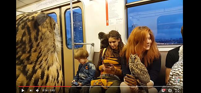 Απίστευτο! Με Γεράκια και Κουκουβάγιες ως κατοικίδια ταξιδεύαν με το μετρό! (Βίντεο)