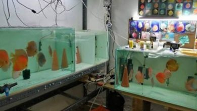 Υπάλληλος μετέτρεψε το Δημαρχείο σε εκτροφείο ψαριών τα οποία πουλούσε παράνομα!