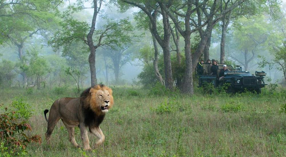 Λαθροκυνηγός ρινόκερων σκοτώθηκε όταν τον ποδοπάτησε ελέφαντας, λιοντάρια έφαγαν το πτώμα του!