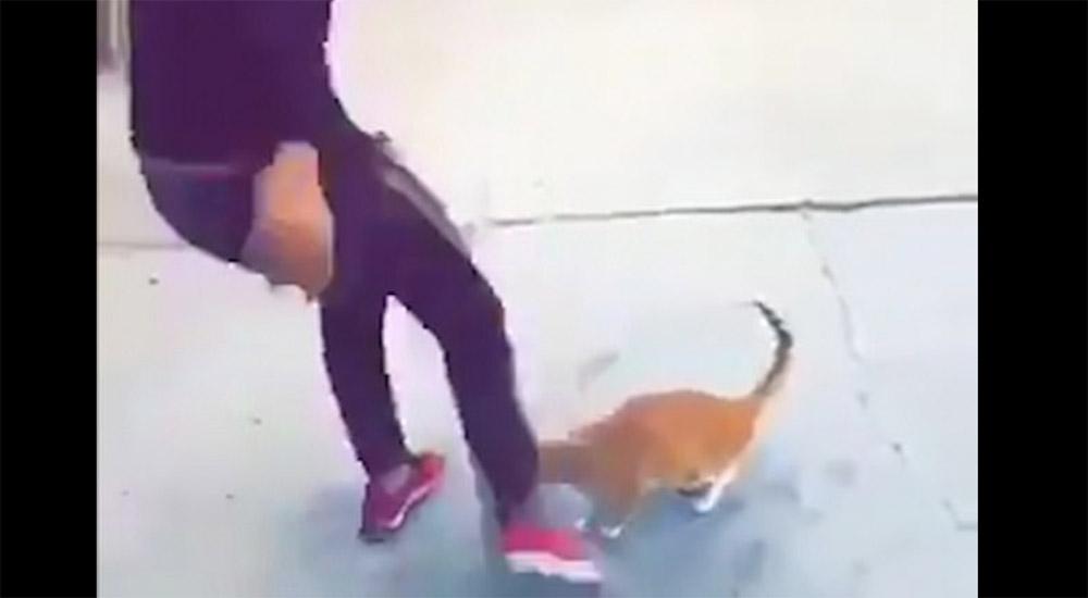 Αλήτης κλωτσάει γάτα χωρίς λόγο και γελάει - Επικηρύχθηκε 5000 λίρες (Βίντεο)